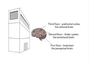model-of-brain